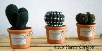 cactus02