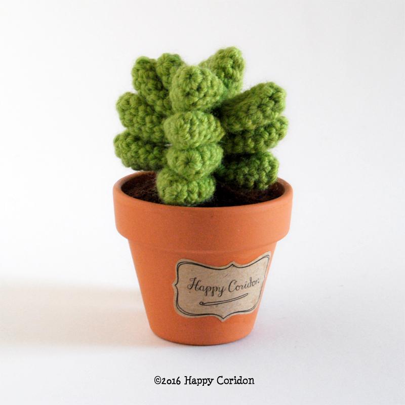 cactus-senape03