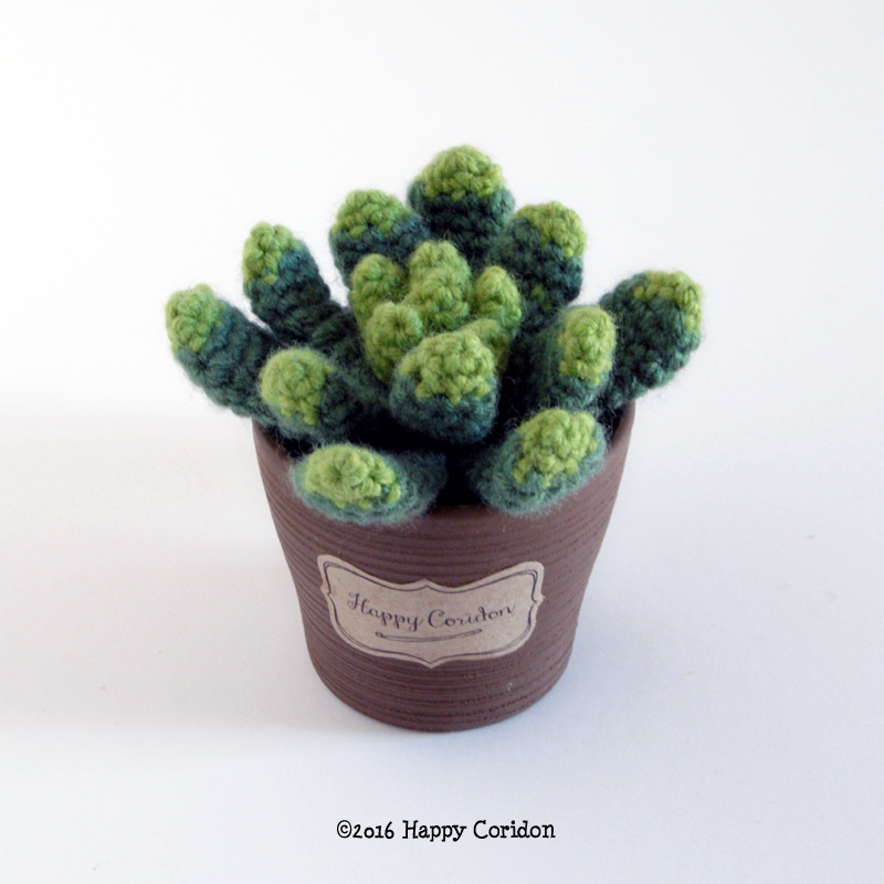 cactus-senape04
