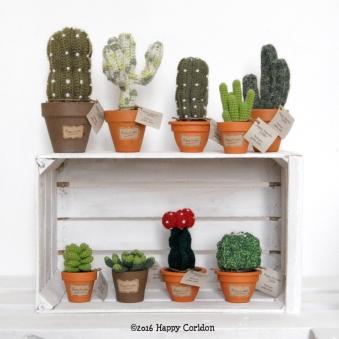 cactus-senape10